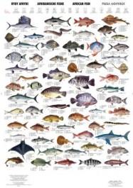 Ryby Afryki