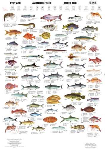 AsiaticFish