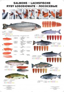 Ryby łososiowate