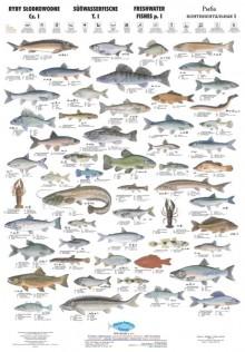 Ryby Słodkowodne I