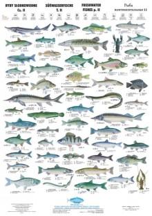 Ryby Słodkowodne II