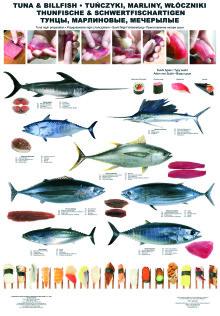 Tuńczyki, marliny, włóczniki